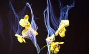 Τα Διαδραστικά Φυτά Botanicus Interacticus της Disney