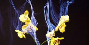Botanicus-Interacticus