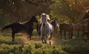 30 Από τις Καλύτερες Εικόνες Ζώων του 2012