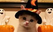 Πράγματα Που Δεν Γνωρίζουμε Για Τις Γάτες